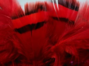 Partridge feathers 3-7 cm-Red