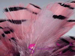 Partridge feathers 3-7 cm-pink